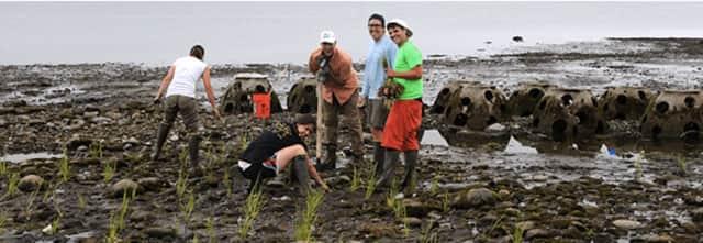 Volunteers work to preserve the coastline at Stratford Point.