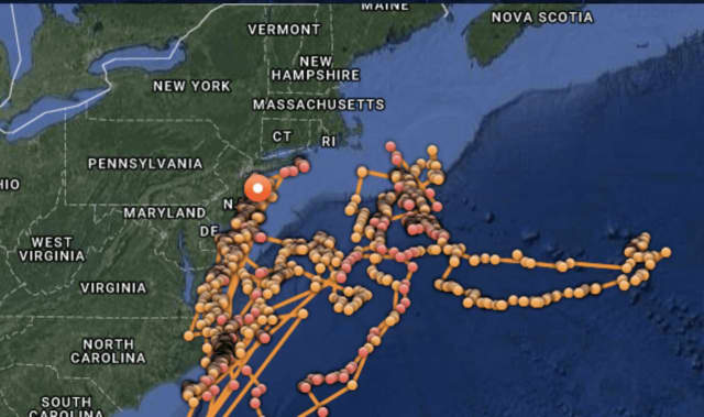 Great white shark tracked heading toward new york armonk daily voice great white shark photo credit terry goss a look at where the 16 foot 3500 pound great white has was publicscrutiny Gallery