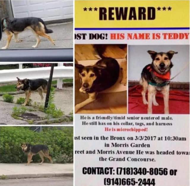 After three months, Teddy was spotted in Yonkers on Sunday.