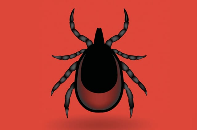 Don't let ticks and Lyme Disease become a problem this summer.