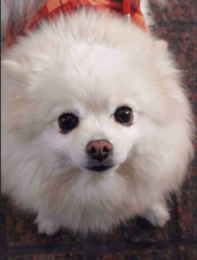 A Garnerville Pomeranian was killed by a neighbor's pit bull.