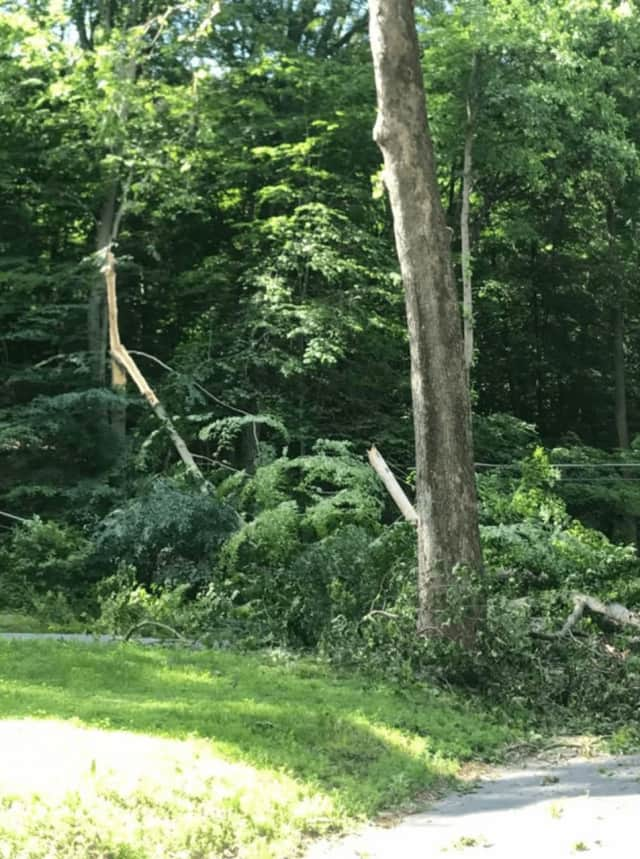 A tree fell onto another, then onto a telephone phone, causing downed power lines in Croton-on-Hudson Wednesday.