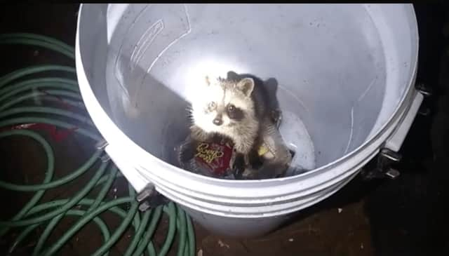 A Ramapo Police officer saved a raccoon that was trapped in a garbage can.