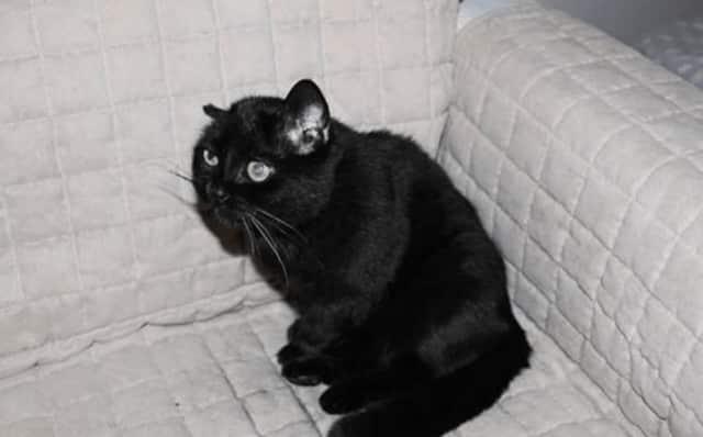 Marzolenka.