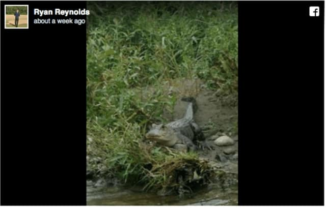 Ryan Reynolds, the mayor of Whitney Point, near Binghamton, posted a photo on Facebook of the alligator after the first reported sightings (above) began on social media last weekend.