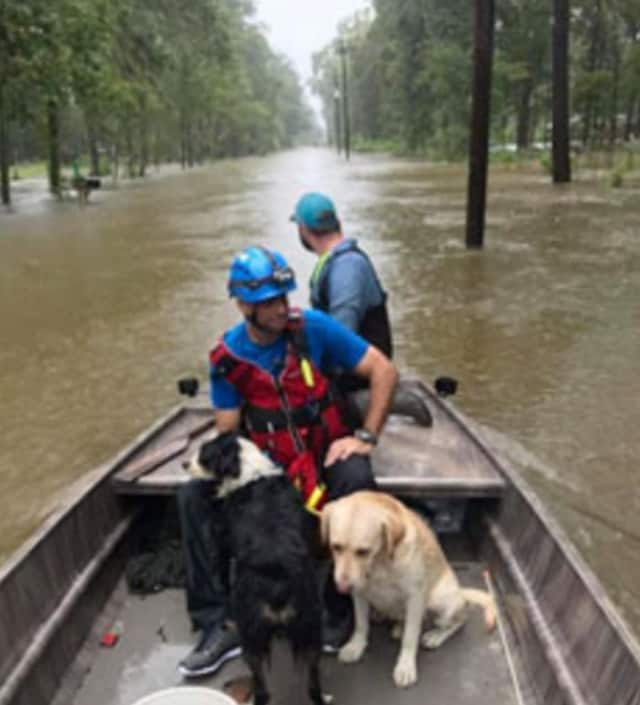 Pet Rescue in Larchmont is assisting animals stranded by Hurricane Harvey.