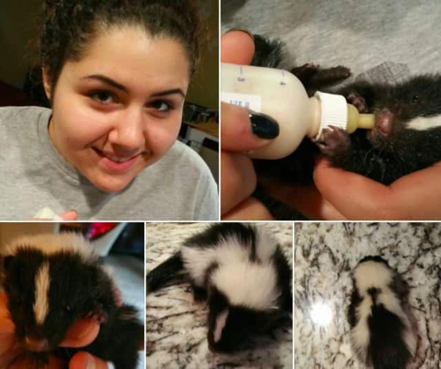 The Russotti family of Englewood Cliffs gave a baby skunk some TLC.