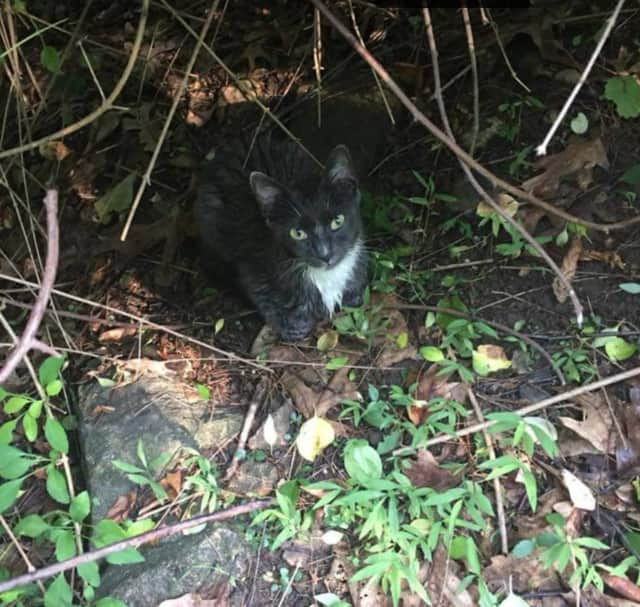 This is the captured kitten in Pound Ridge