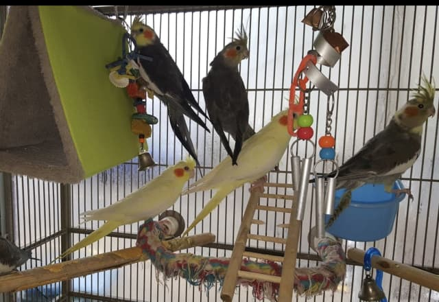 Some of the birds from the store.