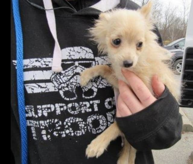 An alleged puppy mill was busted over the weekend.