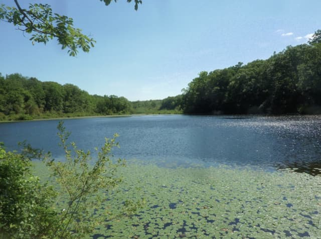 Cranberry Lake Preserve in North White Plains.