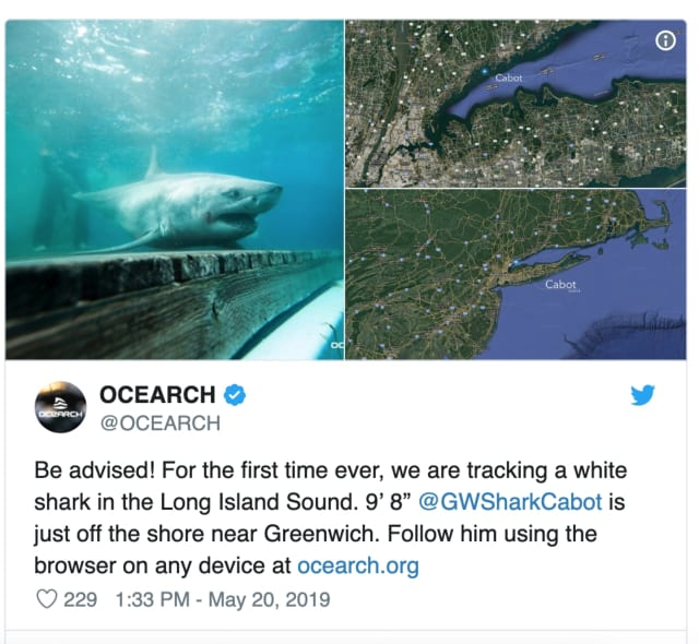 Ocearch.org posted a photo of the great white shark and a map on its Twitter account.