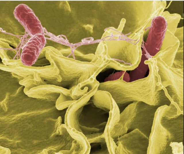 Two separate salmonella outbreaks have now sickened 890 people in 48 states, according to health officials.