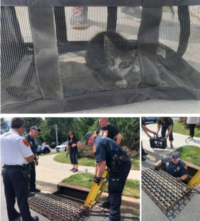 Officers with the Suffolk County Police Department rescued a kitten from a storm drain in Lindenhurst on Sunday, Sept. 8.