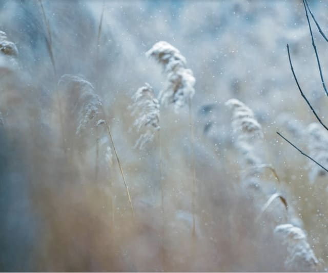 Just two days after the area experienced record warmth, the National Weather Service has issued its first frost advisory of the fall for parts of the region as temperatures are expected to fall into the 30s overnight.