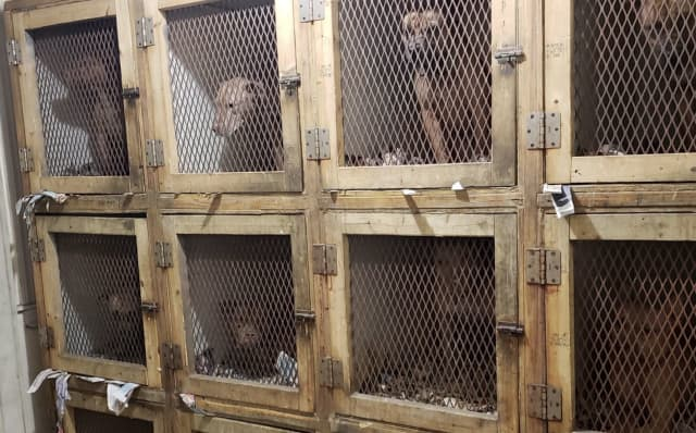 Some of the dogs seized.