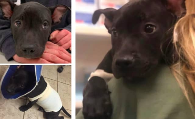 Tyler, a 3-month-old pit bull, was lit on fire with a blow torch in Paterson, local rescuers say.