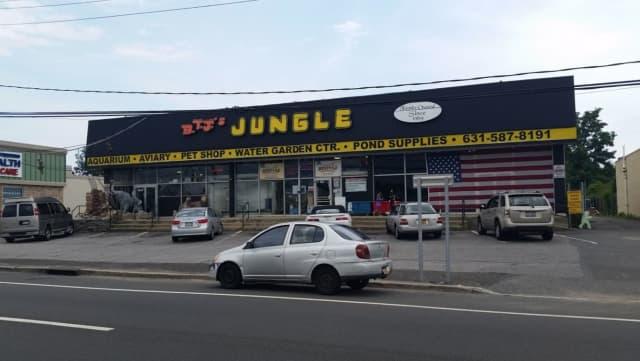 B.T.J.'s Jungle on Sunrise Highway.