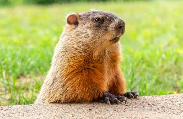 It's Groundhog Day and the verdict is just in.