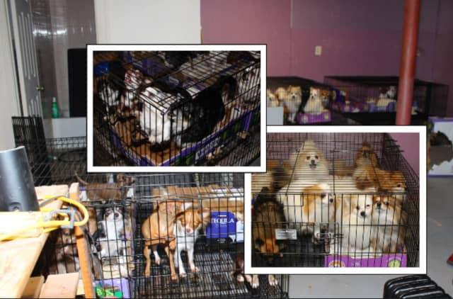 More than 130 animals were recovered from an illegal puppy mill run out of a Scotch Plains home in unsanitary conditions, authorities said.