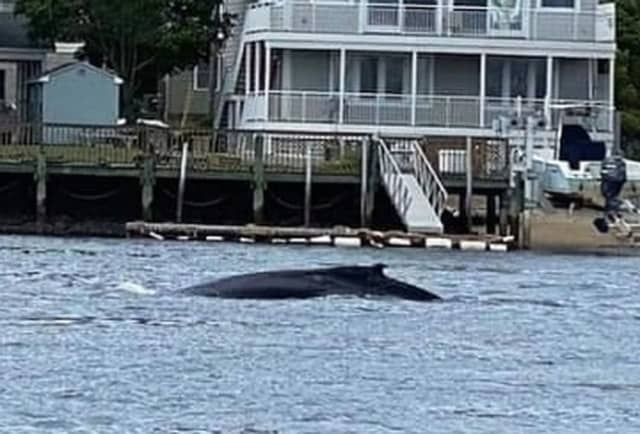 The whale was seen from the Route 36 bridge over the Shrewsbury River around 9:25 a.m., State Police said.