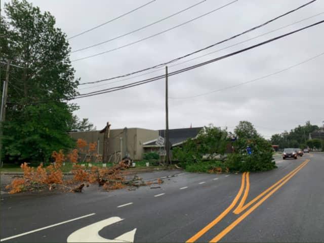 A downed tree in Norwalk.