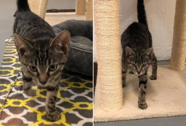 The Phillipsburg Animal Control Department is seeking clues after two kittens were found abandoned and freezing wet behind a local dialysis center.