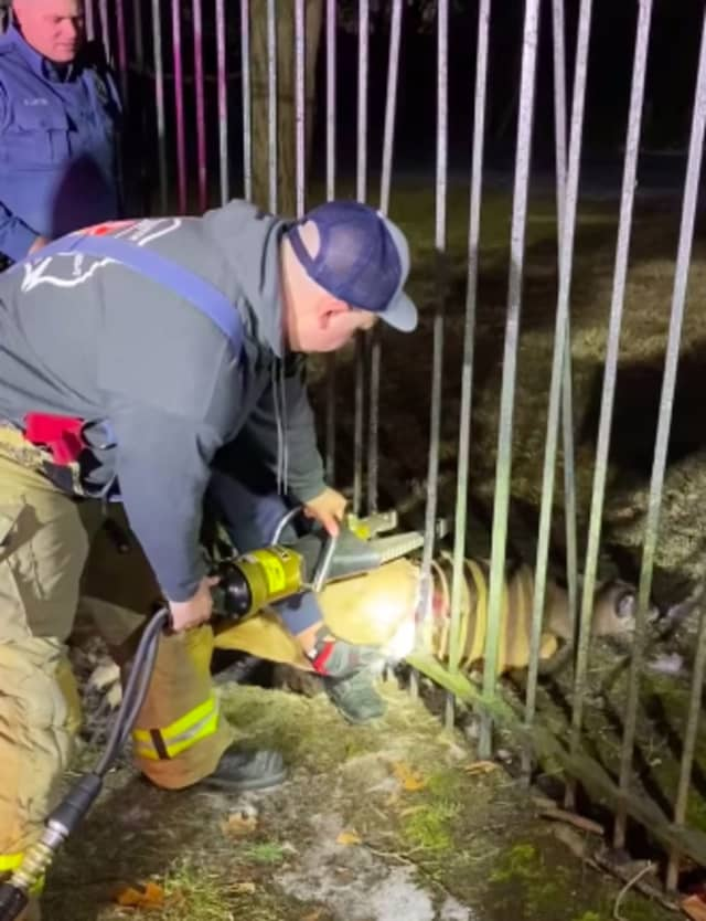 Mantua firefighters and police came to the rescue of a trapped deer.
