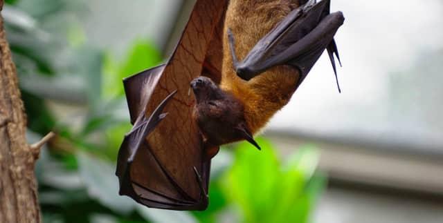 Bat (stock photo).