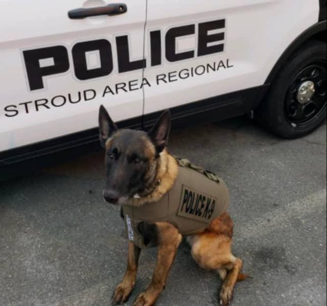 Stroud Area Regional Police K-9 Bendix, who helped arrest Steven R. Wilson, 51, of Allentown.