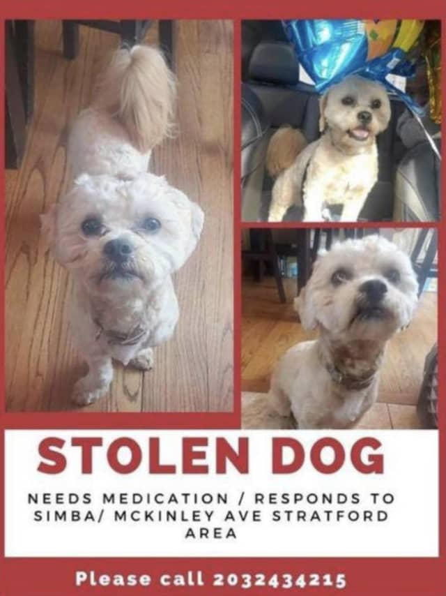 Simba was reportedly stolen in Stratford.