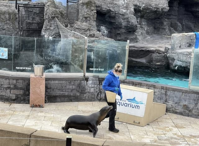 A woman was hospitalized after jumping into the sea lion pool at the Long Island Aquarium.