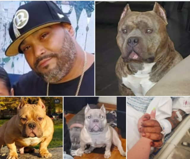 Lou Nunez was seriously injured on a crash on the NJ Turnpike that killed two of his three dogs.