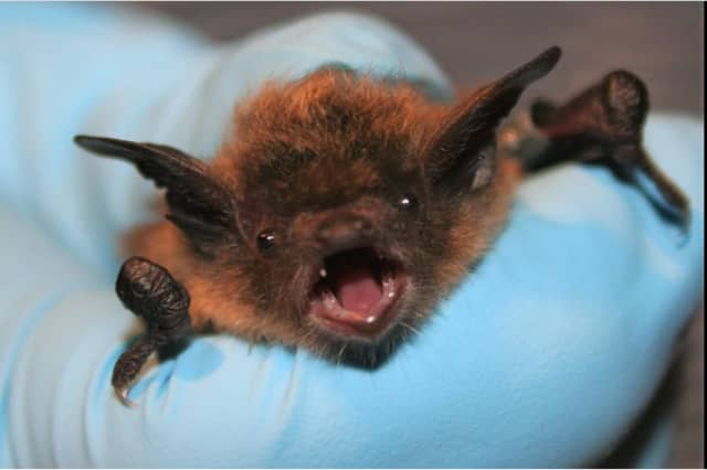 Officials are warning residents to be on the lookout for suspicious behavior from any bats they encounter after a bat found in a Fairfield County home tested positive for rabies.