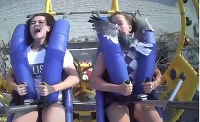 Georgia, 14, and Kiley, 13 -- who live near Weatherly, PA -- were on the SpringShot at Morey's Piers in Wildwood on July 6 when a seagull flew directly into Kiley's arms.