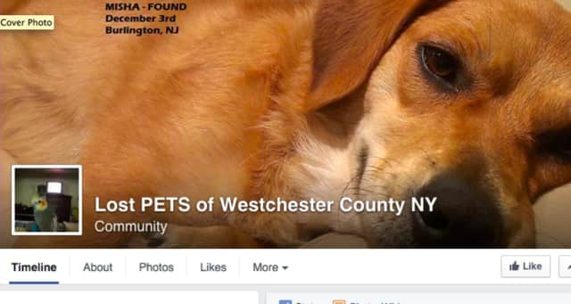 A woman concerned about the well-being of a stray dog is seeking information about his rightful home.
