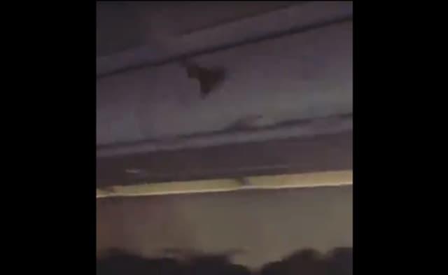 WATCH: Bat Hitches A Ride Aboard Newark-Bound Flight | Essex Daily Voice