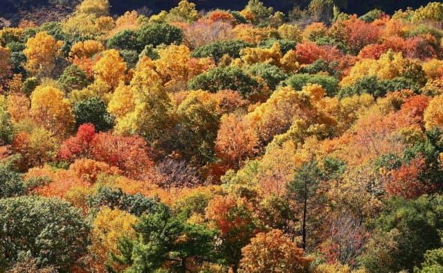 Autumn leaves as seen from Talcott Mountain