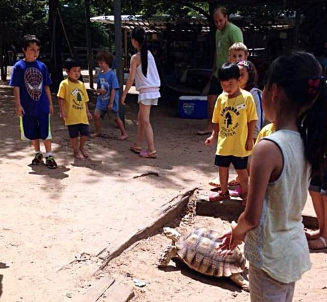 Soupy the tortoise was a guest at Closter Nature Center's 2014 summer programs.