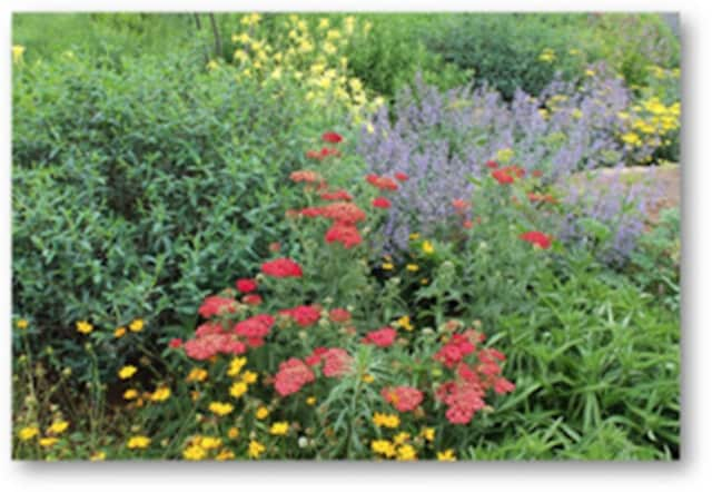 Learn how to tend and plan your gardens like a pro during a special event at the Mahopac Library.