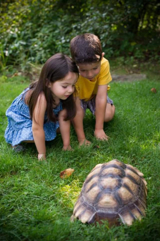 Children examine a tortoise at the Greenburgh Nature Center. The center is seeking donations to help its mission of protecting animals and educating the public.