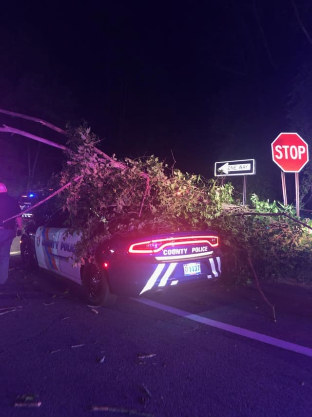 A look at the tree that fell on the Westchester County police cruiser.