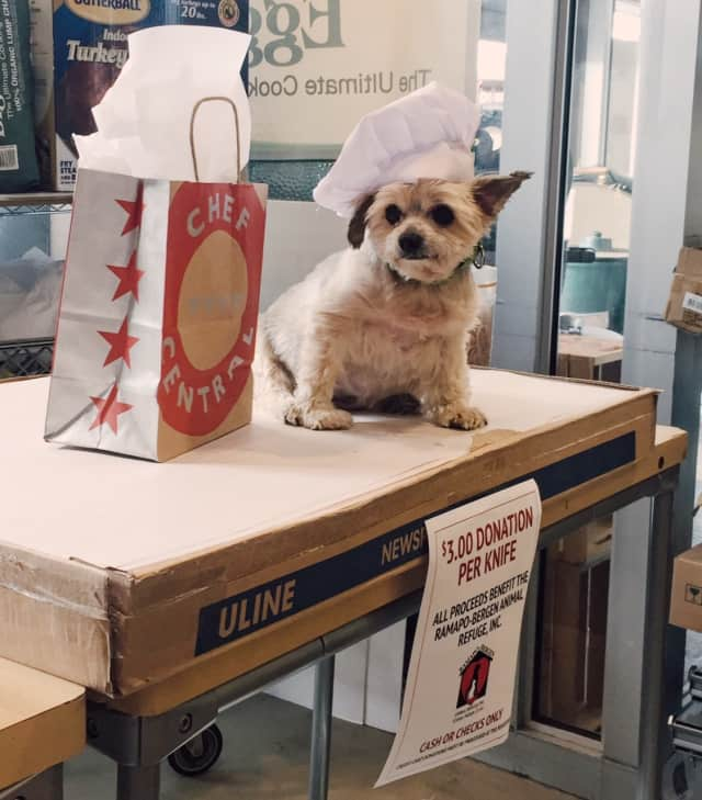 Taz wore his doggie chef's hat during the knife-sharpening event Oct. 17 at Chef Central.