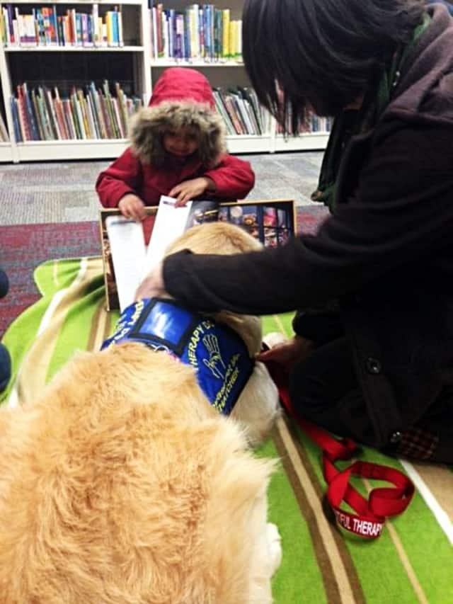 Folks can come read to or visit with Thatcher the Golden Retriever at the Bloomingdale Free Public Library.