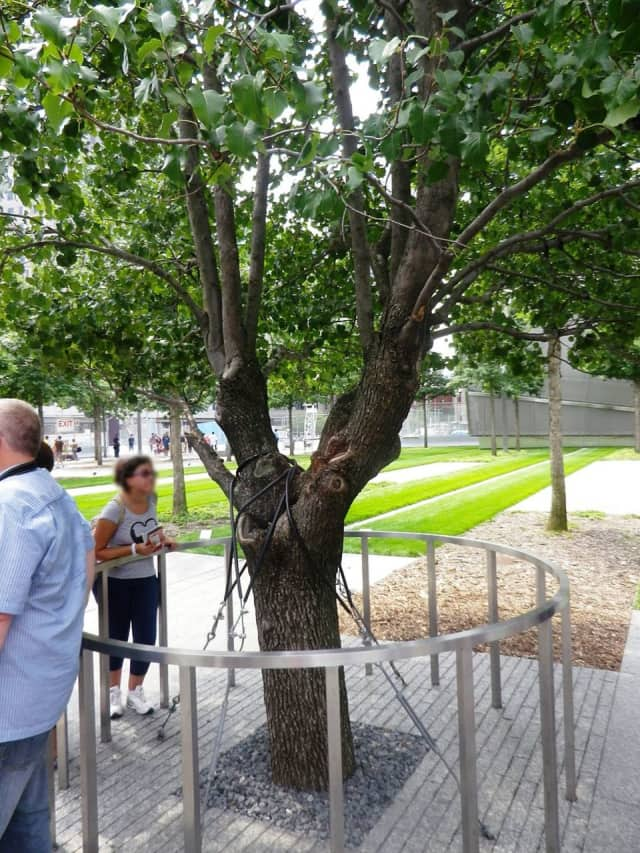 """World Trade Center's """"Survivor Tree"""" is at The National September 11 Memorial and Museum in lower Manhattan. The tree, which was nearly dead after 2001 terror attacks, has come to symbolize our nation's strength, resilience, and survival."""