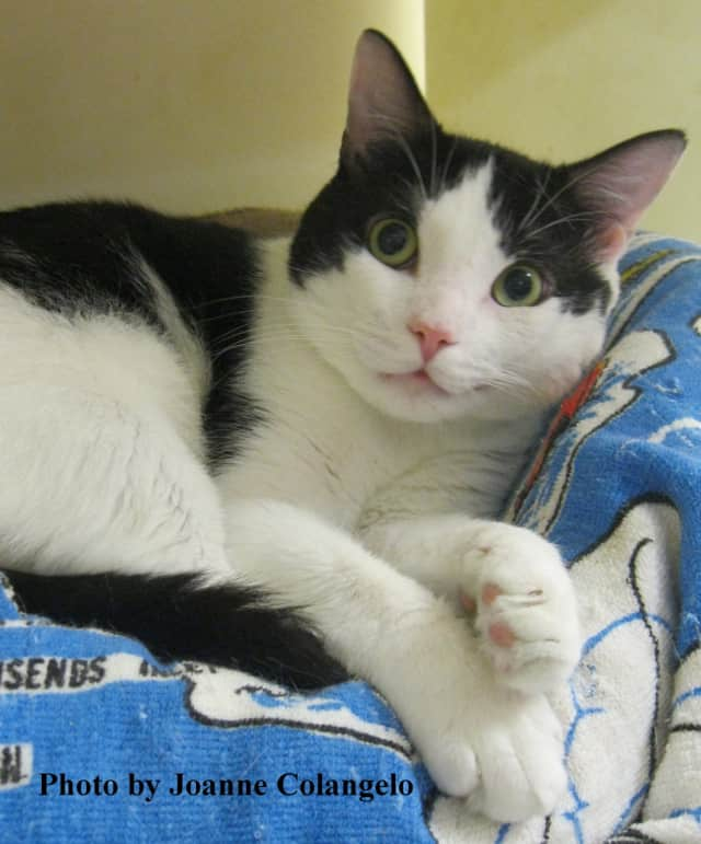 Come visit Toby at Putnam Humane Society -- and take him home, if he's a good fit.