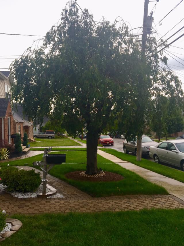 Glen Rock residents can request to have a tree planted in the right of way near their home
