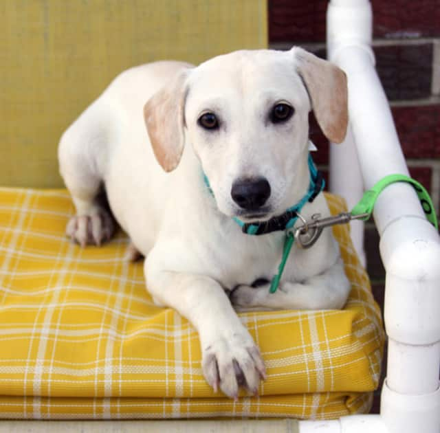The Bergen County Animal Response team is looking for volunteers to help animals in need.