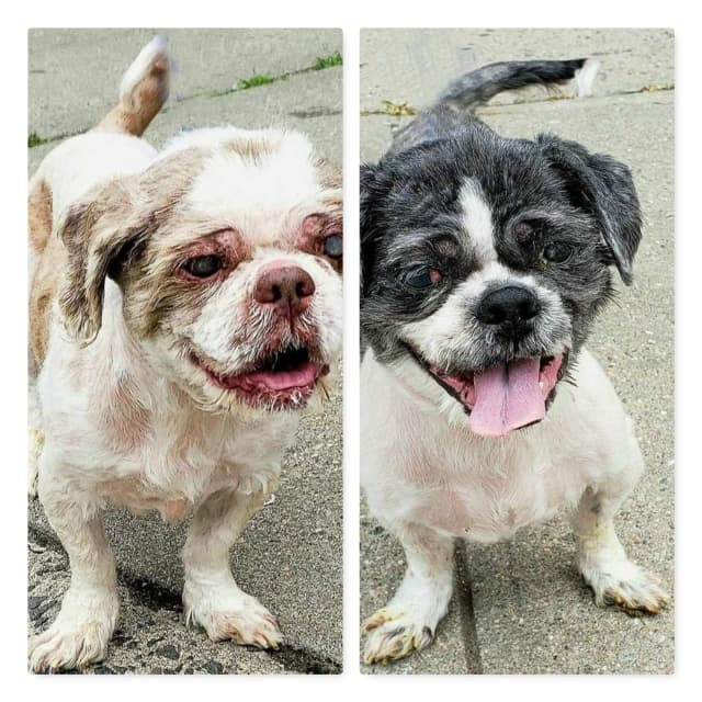 Two dogs were abandoned without food or water inside a foreclosed Newark home.