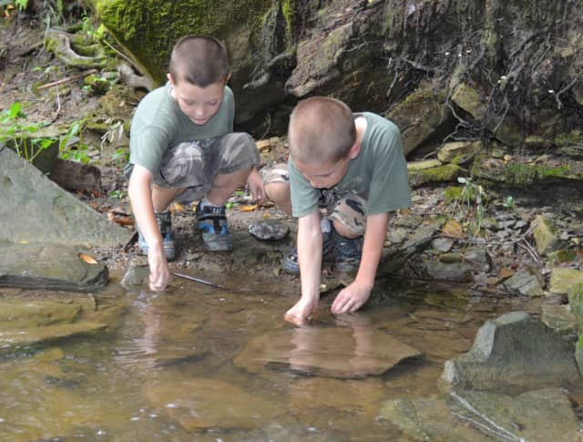 Visit these important woodland pools with dip nets to discover the creatures within. Kids of all ages with parents are welcome.